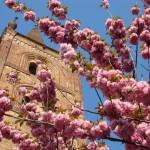 Campanile di San Domenico in primavera